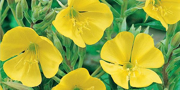 http://aggie-horticulture.tamu.edu/