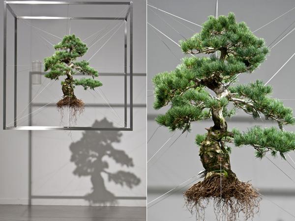 Azuma bonsai
