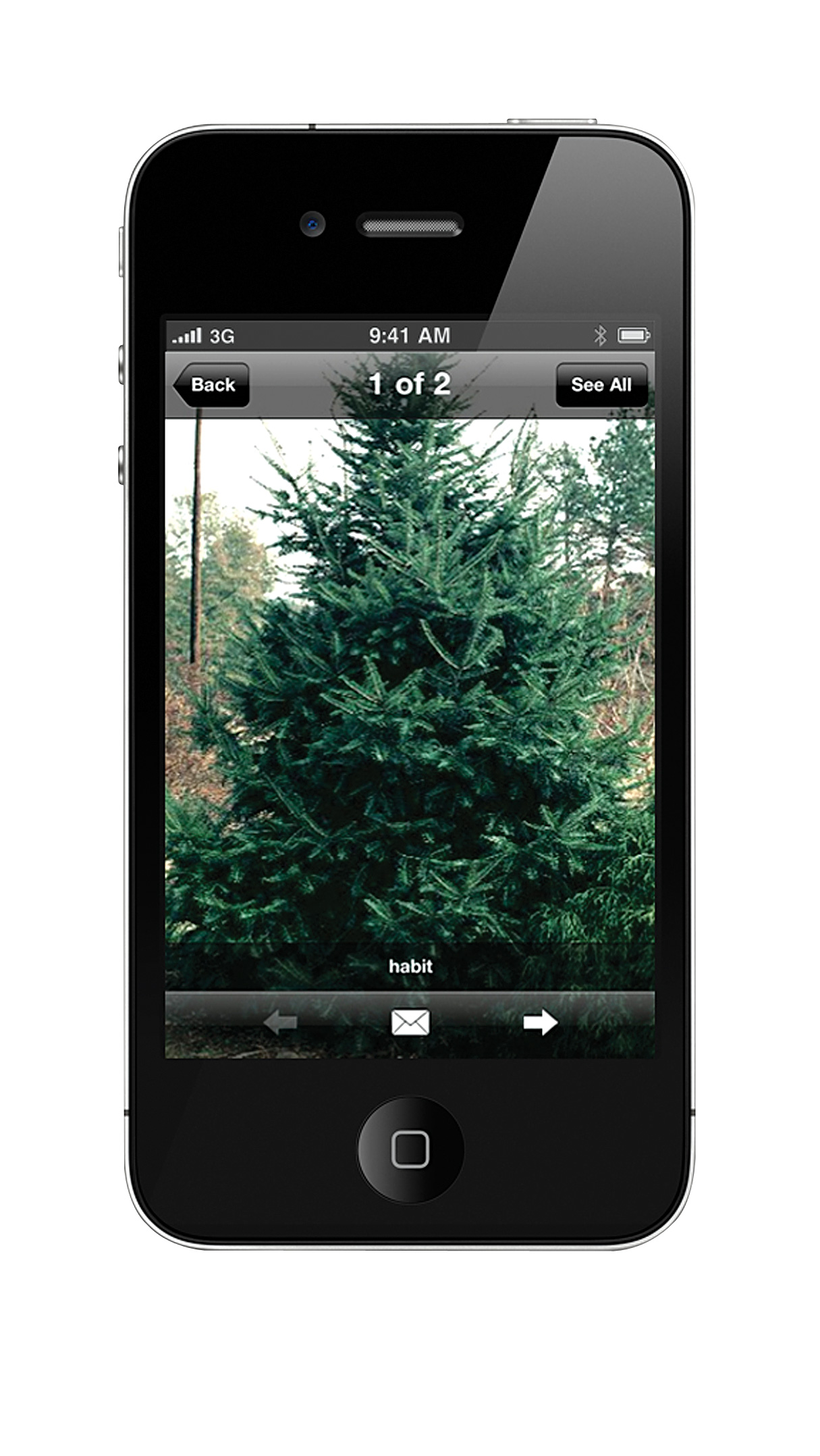 dirr's tree and shrub finder