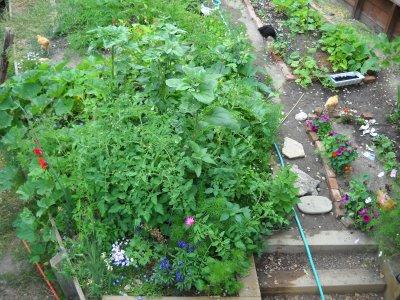 Jennifer Reese garden