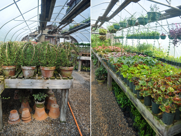 snug harbor greenhouses