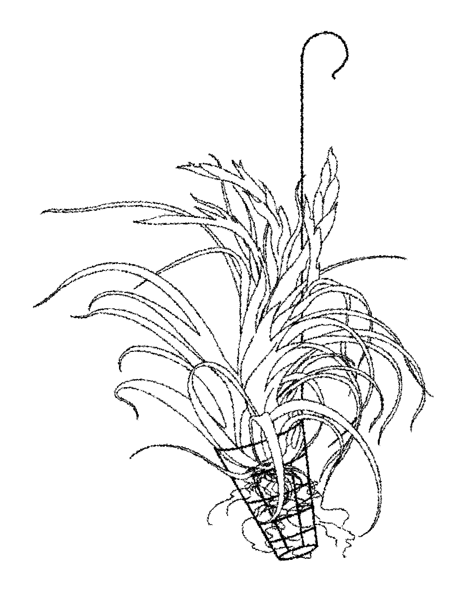 Garden Design - Air Plants