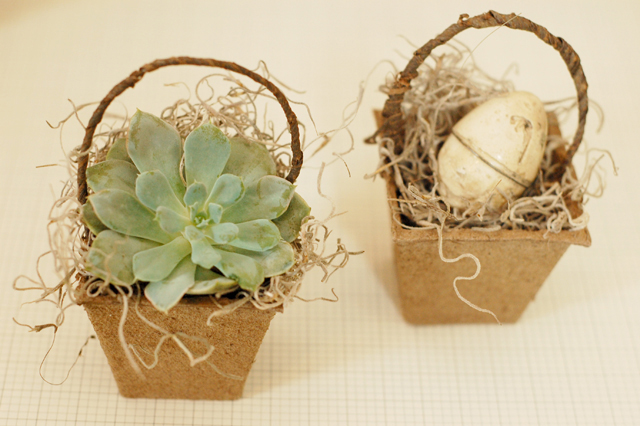 peat basket with succulent