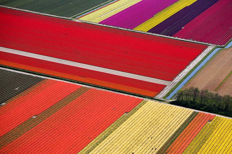 tulip fields2