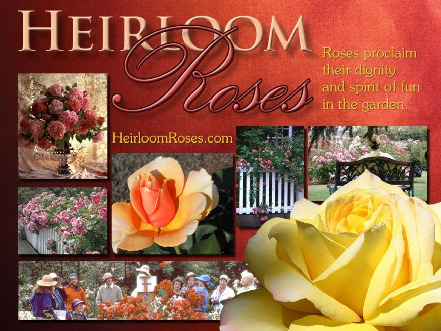Heirloom Roses ad