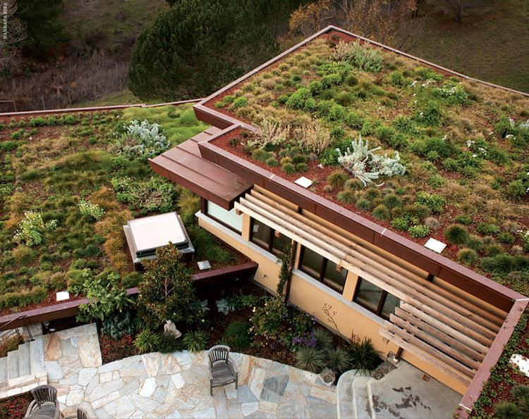 plants green roof
