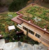 plants green roof