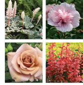 2012 new plants