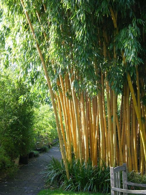 Designing with Bamboo | Garden Design on Backyard:uuezyx-Hy-8= Landscape Design  id=63807