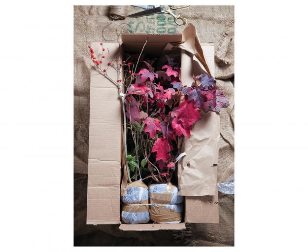 Garden Design - Hydrangea quercifolia 'Pee Wee'
