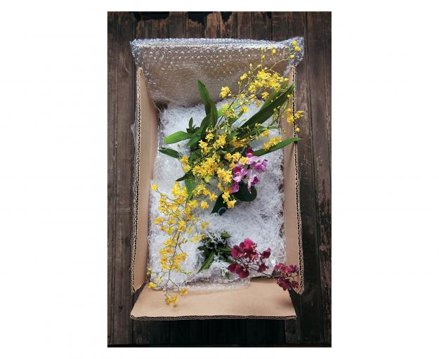 Garden Design - Oncidium 'Yellow Twinkle'