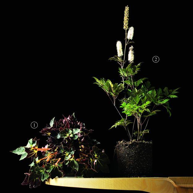 Garden Design - Black Magic 04