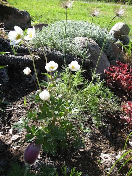 Swedish style in Gardens