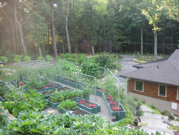 Hallberg vegetable garden
