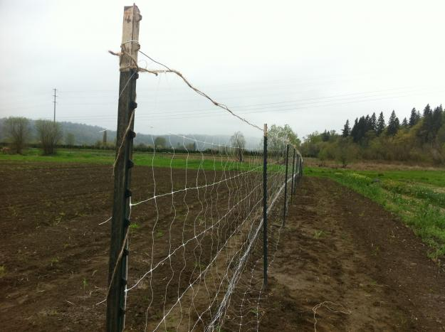 fence for sweet peas