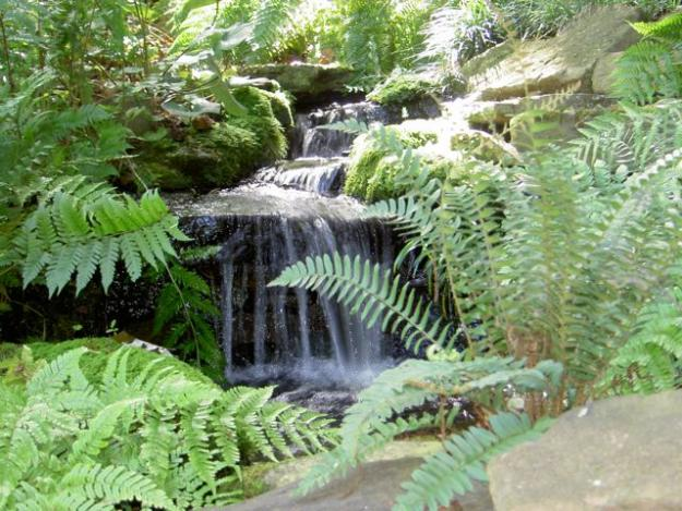 waterfall in garden ferns