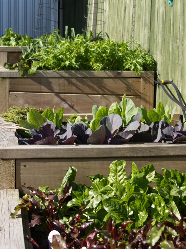 raised beds with vegetables