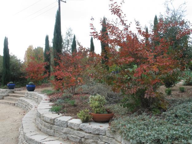 Pasadena Arlington Garden 4