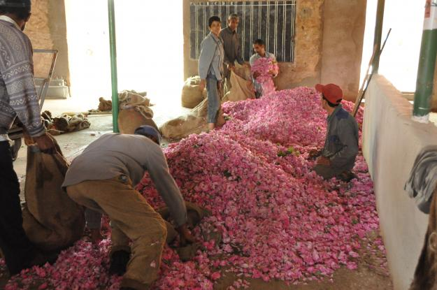 roses of Morocco