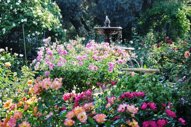 california rose garden 4