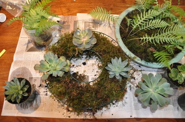 moss succulent wreath 2