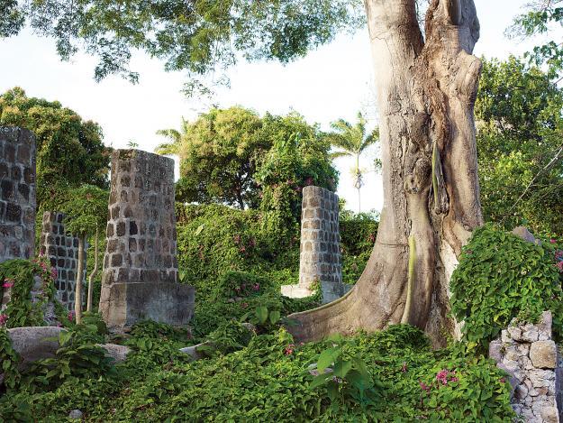 nevis-kapok tree