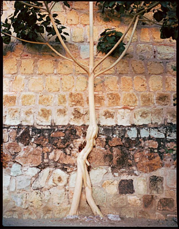Oaxaca fig