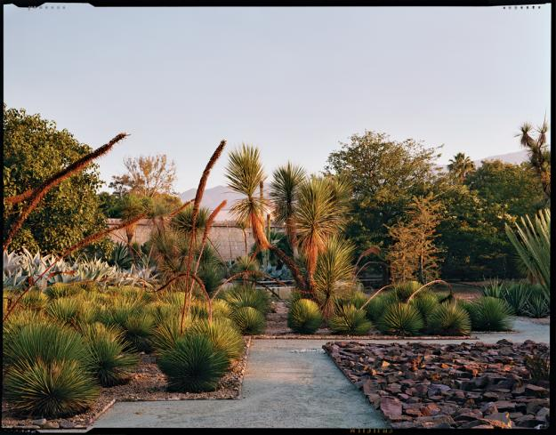 Oaxaca agave