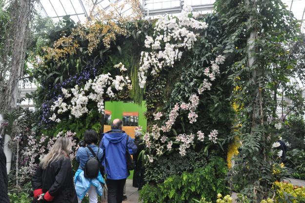 Patrick Blanc orchid show cube 2