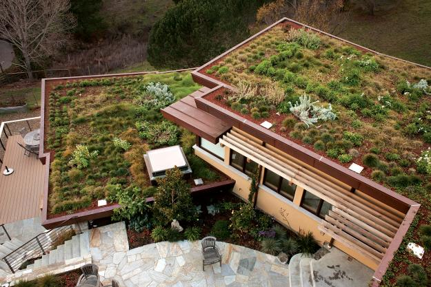 McGlashan Architecture green roof