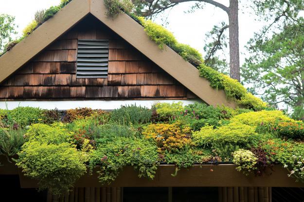 Norfolk Botanical Garden green roof
