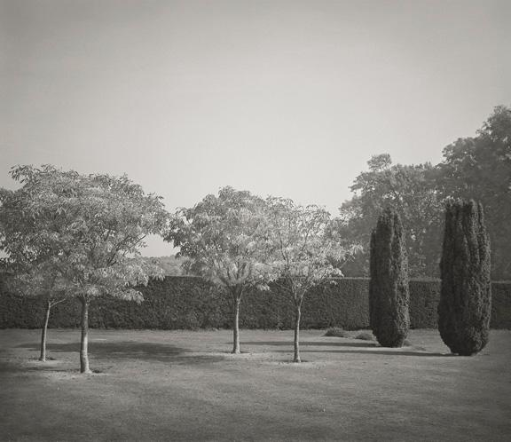 Beth Dow Six Trees