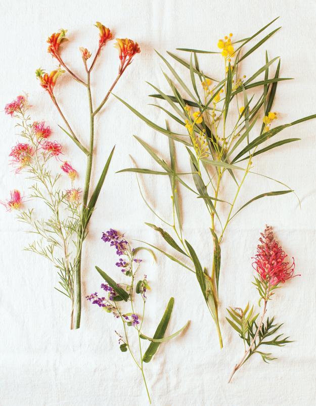 Australian Plants 01