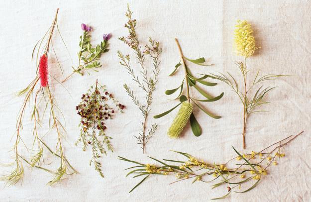 Australian Plants 02