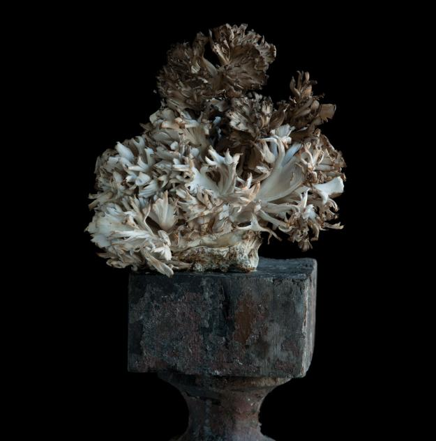 Hen of Woods