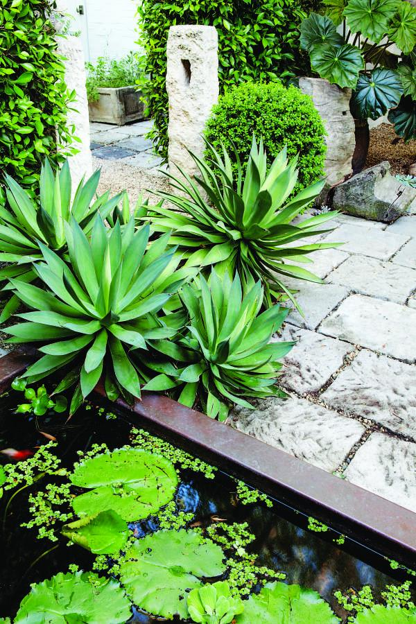 Agaves next to a water feature