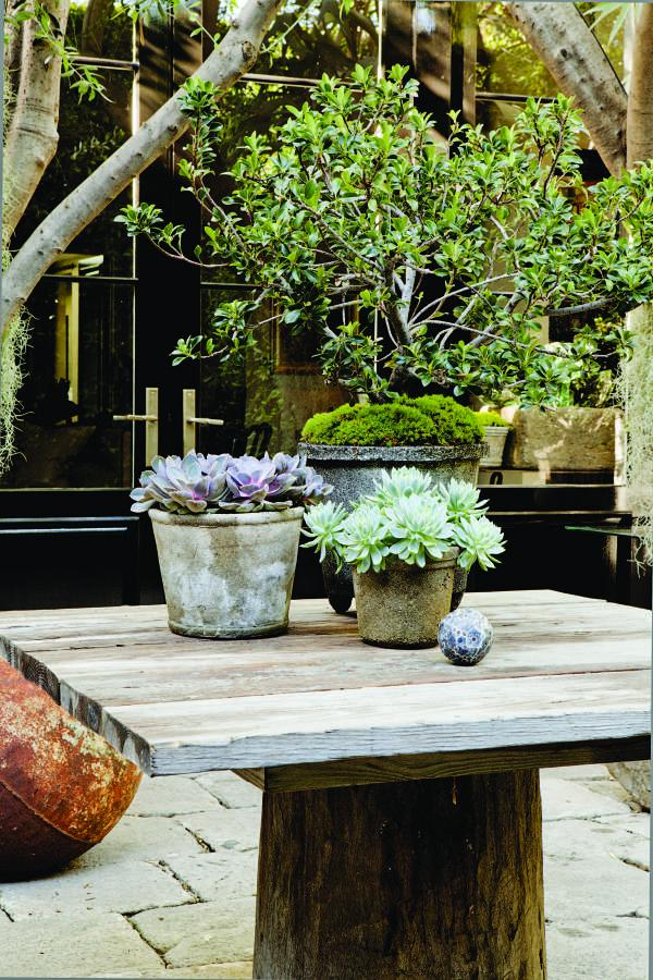 Table with potted plants