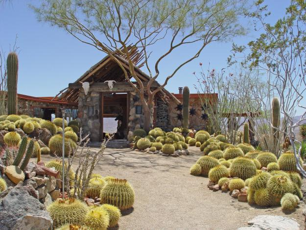 Golden Barrel Cactus Garden