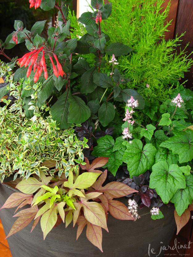 Container Gardening Combo