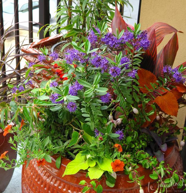 Lush Container Garden