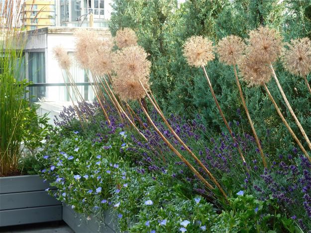 Rooftop Plant Palette