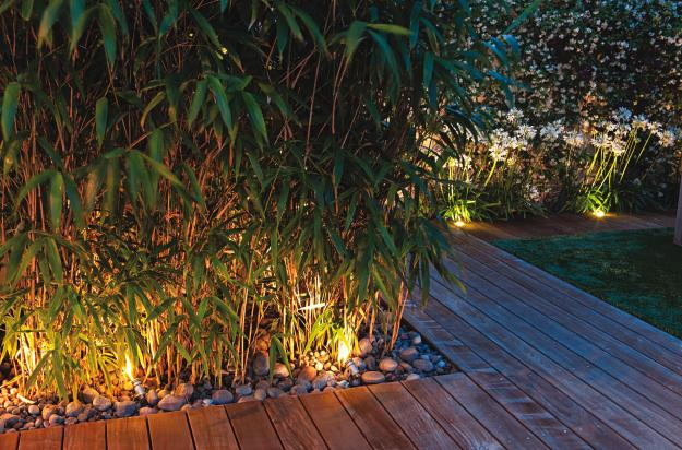 Lighting Bamboo