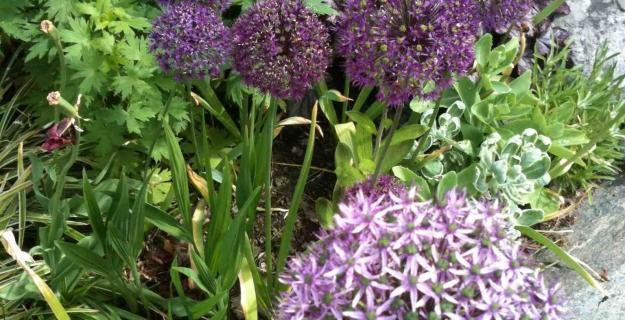 A Flowerbed Garden