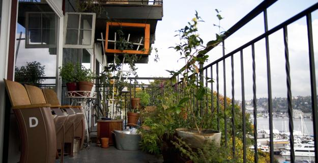 Urban Gardening: All You Need to Know to Get Started