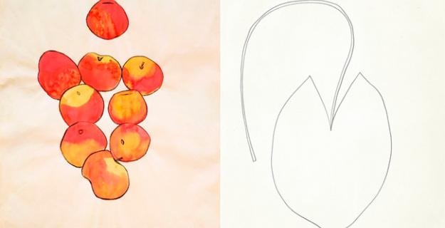 Art & Botany: Ellsworth Kelly's Plant Drawings