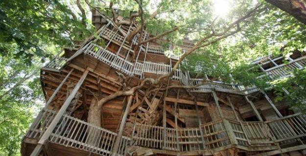 Botanic Superlatives: The World's Largest Treehouse