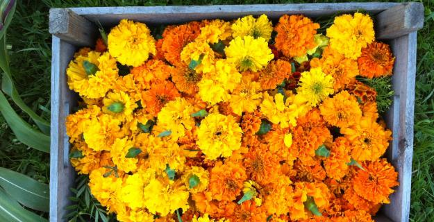 Notes from a Flower Farm: DIY Marigold Garlands