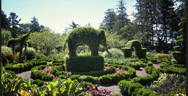Botanic Superlatives: Oldest Topiary Garden in the US