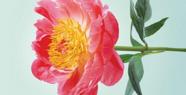 Art & Botany: Sasha Kurmaz's Botanic Photography