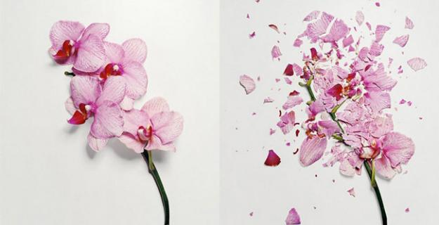 Art & Botany: Broken Flowers